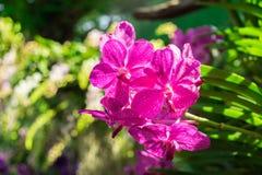 Flor de las orquídeas Fotos de archivo