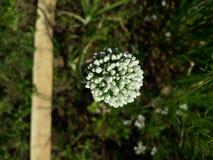 Flor de las plantas fotografía de archivo