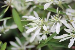 Flor de Lilly imagem de stock royalty free