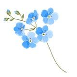 Flor de lino ilustración del vector