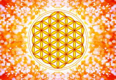 Flor de Live Symbol - geometría sagrada Imágenes de archivo libres de regalías