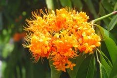 Flor de llama anaranjada, imagen de archivo