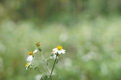 Flor de los botones de capa Foto de archivo libre de regalías