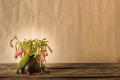Flor de los floreros Imagenes de archivo