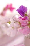 Flor de los guisantes de olor imagenes de archivo