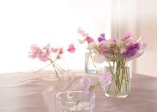 Flor de los guisantes de olor foto de archivo