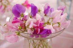 Flor de los guisantes de olor Fotografía de archivo