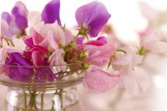 Flor de los guisantes de olor Fotos de archivo