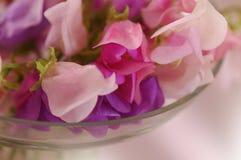 Flor de los guisantes de olor Fotos de archivo libres de regalías