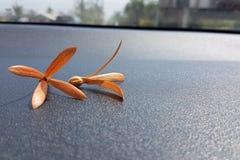 flor de los palozantos Fotos de archivo libres de regalías