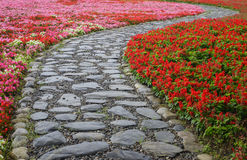 Flor de los splendens de la begonia y de Salvia Imagen de archivo