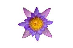 Flor de loto aislada Imágenes de archivo libres de regalías