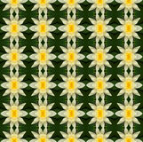 Flor de loto amarilla en la plena floración inconsútil Fotos de archivo libres de regalías