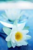 Flor de loto blanco imagenes de archivo