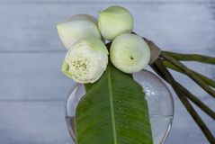 Flor de loto blanco hermosa fresca y hoja verde fresca en el florero de cristal redondo sobre fondo borroso Fotos de archivo libres de regalías