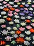Flor de loto colorida en el río Imágenes de archivo libres de regalías