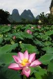 Flor de loto en China Foto de archivo libre de regalías