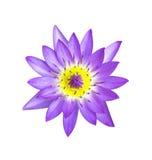 Flor de loto magenta Fotografía de archivo libre de regalías