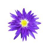 Flor de loto magenta en blanco Imagen de archivo