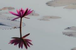 Flor de loto roja Foto de archivo