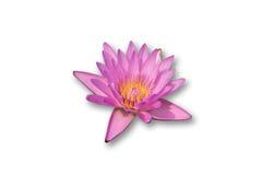 Flor de loto rosada con el fondo del wihte Fotos de archivo libres de regalías