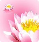 Flor de loto rosada - fuerzas del tema de la naturaleza Fotos de archivo libres de regalías