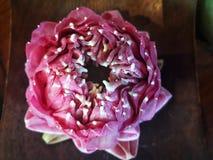 Flor de loto rosada hermosa en naturaleza foto de archivo libre de regalías