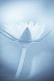 Flor de loto suave Imágenes de archivo libres de regalías