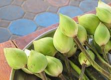 Flor de loto verde Imagenes de archivo