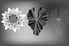 Flor de Lotus e elementos das folhas Imagens de Stock Royalty Free
