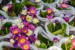 Flor de Lotus en las bolsas de plástico Imagen de archivo libre de regalías