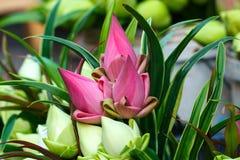 Flor de Lotus, flor de loto para la adoración budista Buda en el traditionof Tailandia del templo Imagenes de archivo