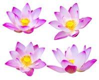 Flor de Lotus no branco Imagem de Stock Royalty Free