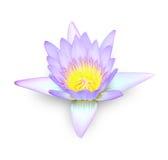 Flor de Lotus no branco Fotos de Stock