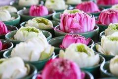 Flor de Lotus no copo Imagens de Stock Royalty Free