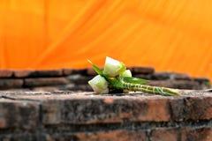 Flor de Lotus para la adoración Imagenes de archivo