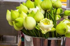 Flor de Lotus para que os povos budistas respeitem Fotografia de Stock Royalty Free