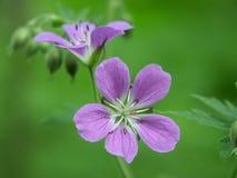 Flor de madera Imagen de archivo