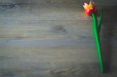 Flor de madera Tulipán rojo en la toalla blanca Imagen de archivo