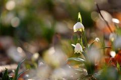Flor de marcha com a flor na mola Fotografia de Stock Royalty Free