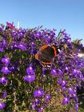 Flor de mariposa imagenes de archivo