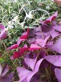 Flor de mariposa Fotografía de archivo libre de regalías