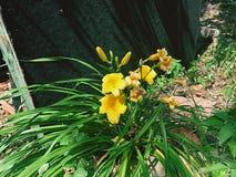 Flor de mirada fresca foto de archivo