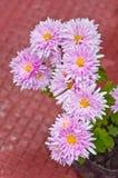Flor de Mun del florista rosado Fotos de archivo libres de regalías