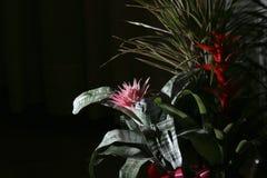 Flor de noche Foto de archivo libre de regalías