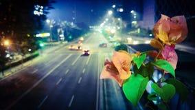 Flor de noite fotografia de stock royalty free