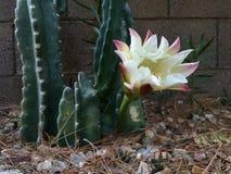 Flor de noite do totem Imagem de Stock Royalty Free