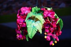 Flor de Orchird Imagen de archivo libre de regalías