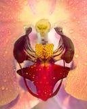 Flor de Orhid no fim acima foto de stock