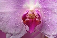 Flor de Orhid no fim acima fotos de stock royalty free